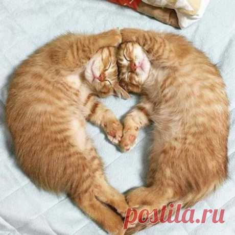 Два котика лучше, чем один