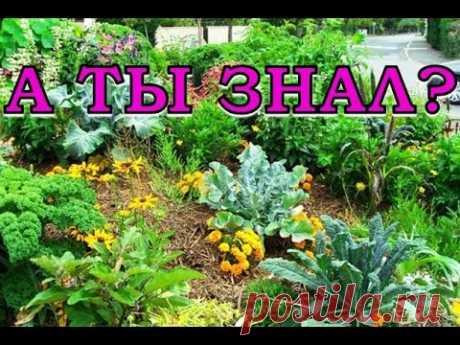 Овощи-соседи на грядках - YouTube