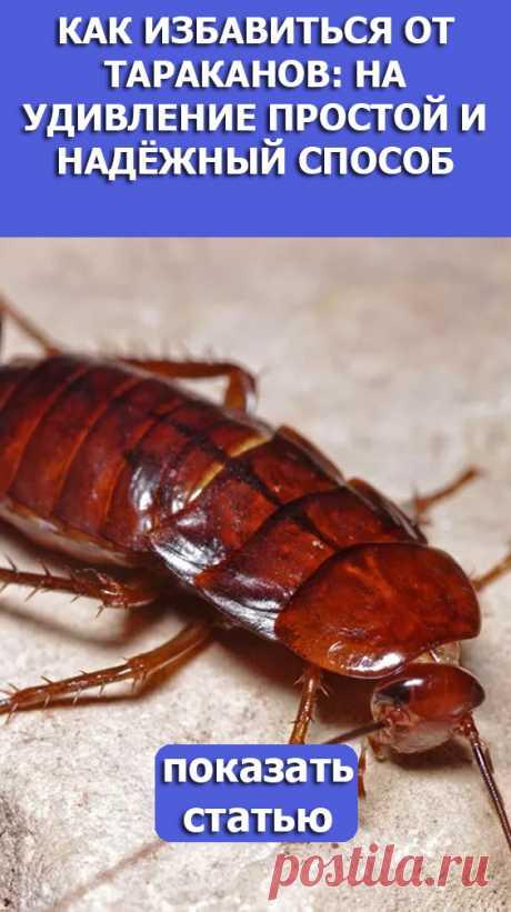 СМОТРИТЕ: Как избавиться от тараканов: на удивление простой и надёжный способ