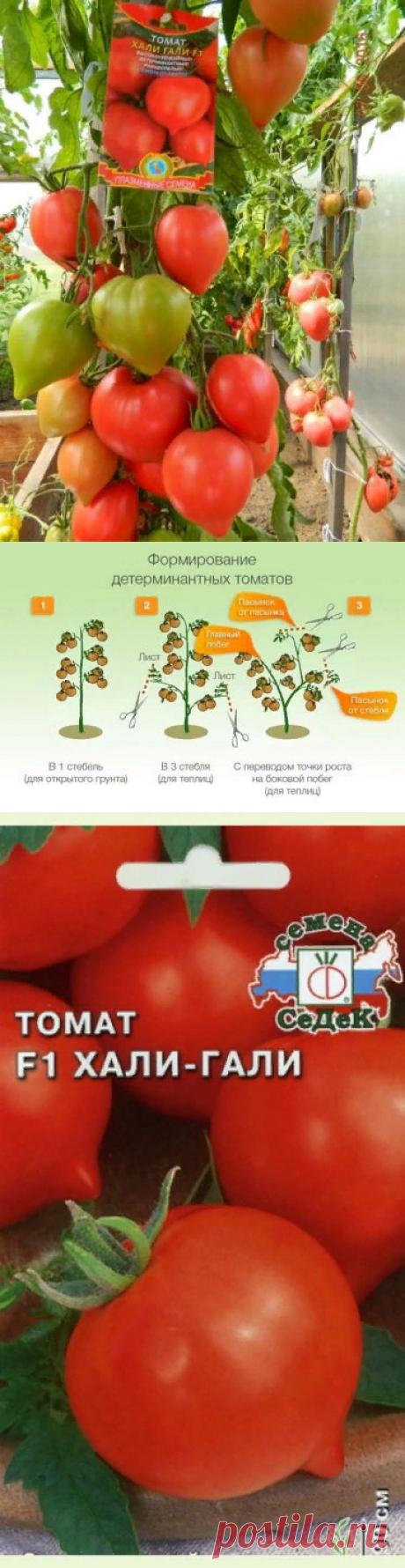 Томат Хали-Гали F1: описание и характеристика сорта, особенности выращивания, отзывы тех, кто сажал, фото