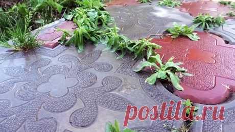 Почти бесплатный способ избавиться от сорняков в швах тротуарной плитки без химии В швах тротуарной плитки накапливается пыль, из которой потом прорастают сорняки. Они не только портят внешний вид дорожек, но и разрушают их. Корни растений подрывают плитку, иногда даже вызывают ее растрескивание. Чтобы этого избежать, с сорняками нужно своевременно бороться. Что