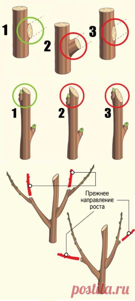 (+1) тема - Пять главных дел в весеннем саду   ОГОРОД БЕЗ ХЛОПОТ