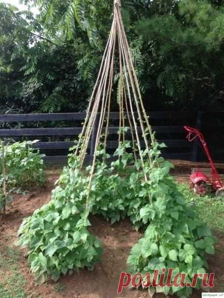 Посадка огурцов «елочкой». Это очень эффективный и урожайный способ