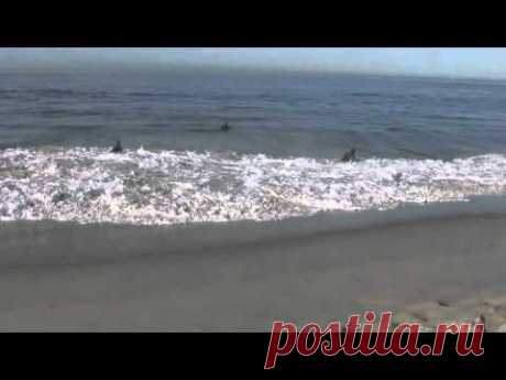 Звуки Тихого Океана, волны, шум прибоя! - YouTube