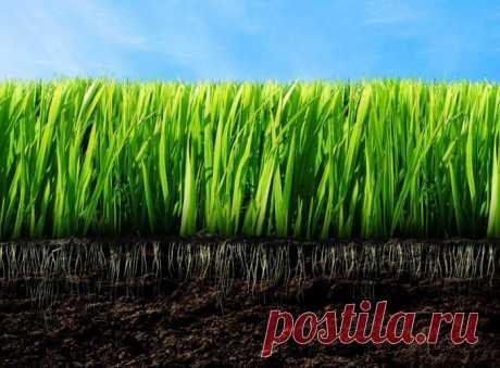 Как сделать почву более плодородной без химических удобрений
