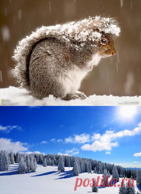 фото_обои *зима*