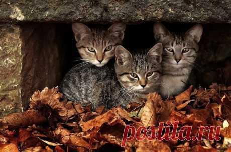 Бездомные кошки, тоже красавицы №2   Четвероногий юмор