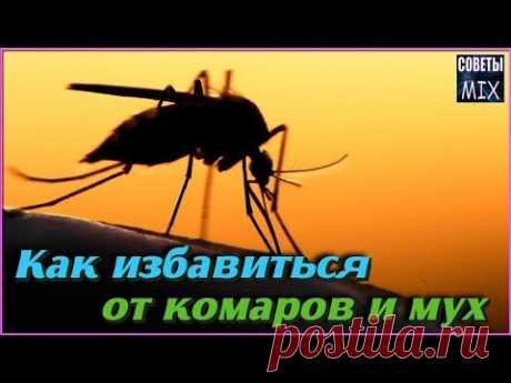 Как избавиться от комаров и мух с помощью этих необычных растений - YouTube
