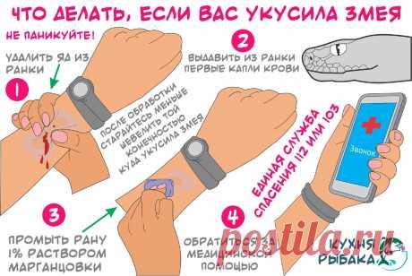 Как избежать укуса гадюки или любой другой змеи | Кухня рыбака | Яндекс Дзен