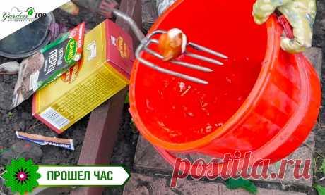 Маленькие хитрости при посадке тюльпанов | Garden-Zoo.ru | Яндекс Дзен