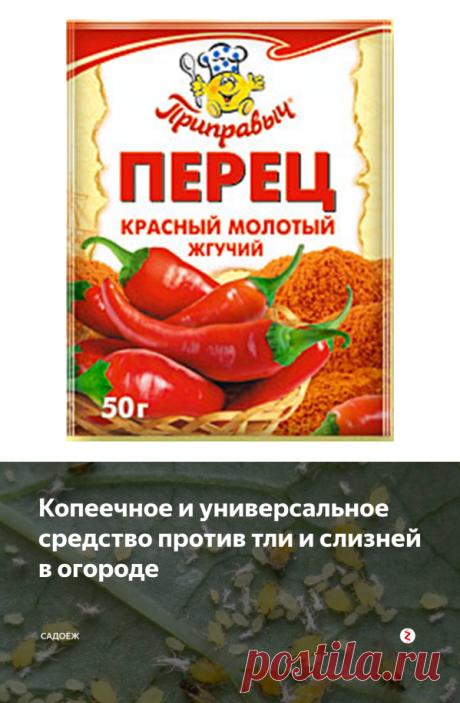 Копеечное и универсальное средство против тли и слизней в огороде | садоёж | Яндекс Дзен