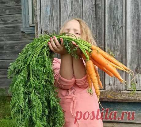Не пропадёт ни грамма: как готовить ботву моркови. Да так, что пальчики оближешь   Дауншифтеры   Пульс Mail.ru Я не выбрасываю ботву моркови. В ней не меньше витаминов, чем в корнеплодах. А ещё она очень ароматная, и в сочетании со специями даёт...