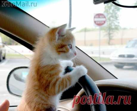 Крепче за баранку держись, шофёр!