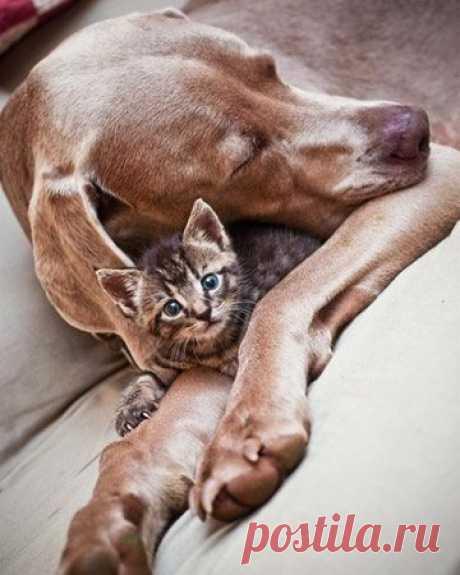 ...как кошка с собакой