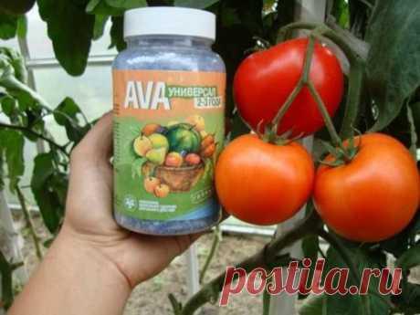 Удобрения для помидоров, которые дадут вам в 5 раз больше урожая (от дачников)