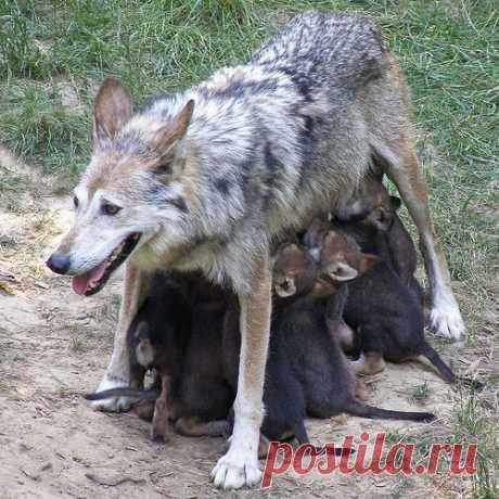 Быть мамой — не просто.....