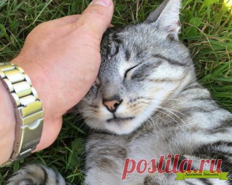 Почему кошки мурлыкают? | Дневник Зоолога | Яндекс Дзен