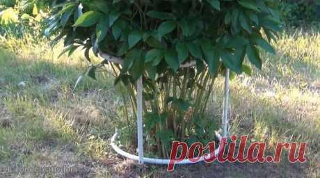 LA CONSTRUCCIÓN PARA LA ATADURA DE LAS PEONÍAS \u000a\u000a\u000aLa preparación\u000a \u000aNos será necesario:\u000a1. El conducto de agua metalloplastikovaya\u000a2. El pedazo del árbol, en este caso vagonka\u000a3. El pedazo de la manga de jardín del diámetro un poco es más grande que el conducto de agua\u000a4. samorezy\u000a \u000aDe los asuntos …