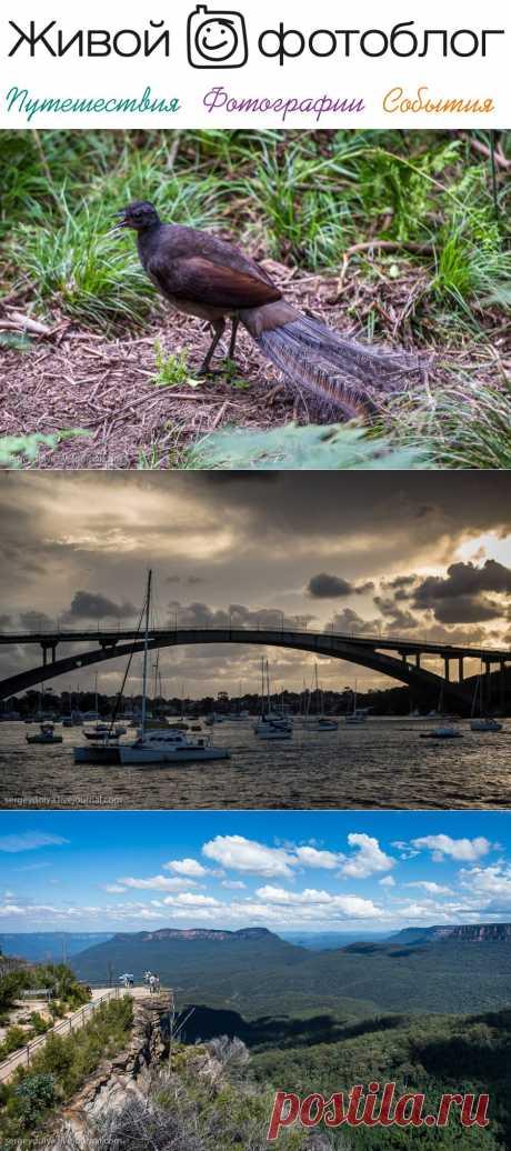 Австралия. Голубые горы и вечерний Сидней