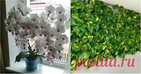 Бурное цветение и пышная листва обеспечены, если полить растения этой простой подкормкой!  Результат видно сразу.