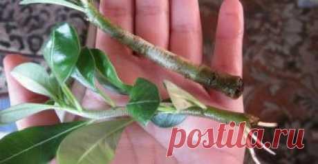 Отличный способ укоренения растений, действует даже там, где другие бессильны - День вдохновения
