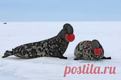 ФОТО ДНЯ. А вы знали, что такие тюлени тоже бывают?