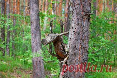Лесной конек 2