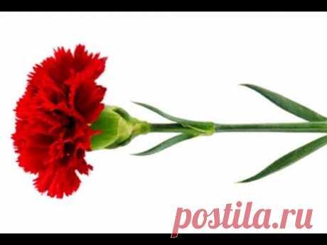 Сделать Цветы Гвоздика гофрированной Бумаги-Craft Tutorial.Поделки с детьми бумаги/DIY flowers easy