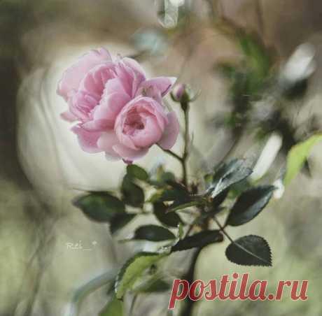 Нельзя удержать ни ветер, ни аромат розы. Все призрачно, неуловимо… Любовь, счастье, дыхание жизни мимолетны и преходящи. Блажен тот, кто способен остановить мгновение.  — Эллен Бали —