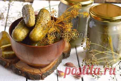 Хрустящие квашеные огурцы рецепт с фото, как приготовить на Webspoon.ru