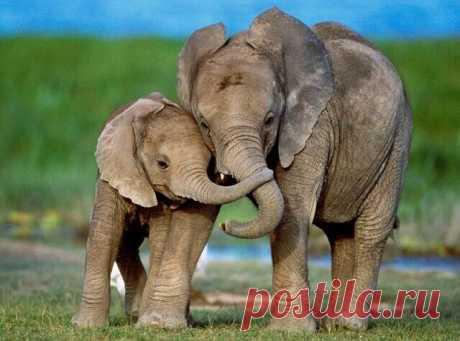 Бабушка, а почему у тебя такие большие глаза? - Это чтобы лучше видеть тебя. - Бабушка, а почему у тебя такие большие уши? - Это чтобы лучше слышать тебя. - Бабушка, а почему у тебя такой большой нос? - Внучек, отстань, мы же слоны, в конце концов!)...