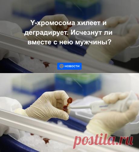 Y-хромосома хилеет и деградирует. Исчезнут ли вместе с нею мужчины? - Новости Mail.ru