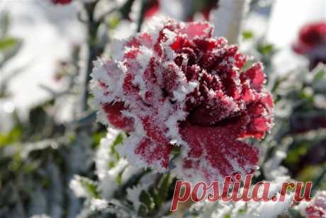 Плейкаст «Цветы под снегом»
