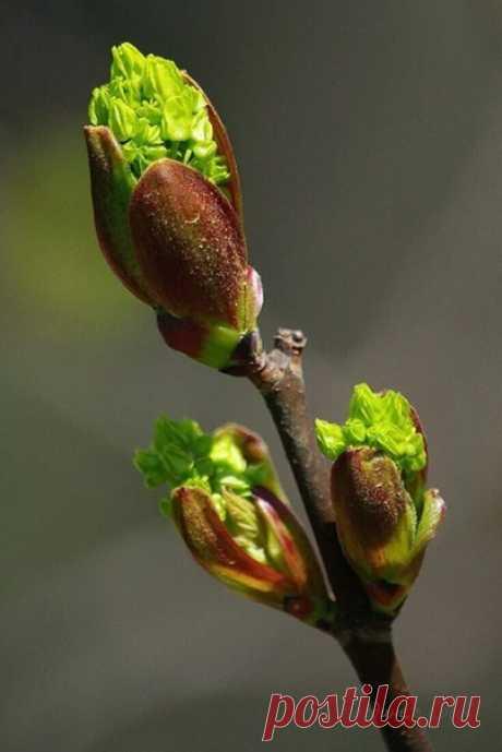 """Ещё чуть-чуть, весна взорвётся почками, Проснётся всё живое на земле!... ...А вы, друзья, читайте между строчками: """"Душой не застревайте в феврале!..."""""""