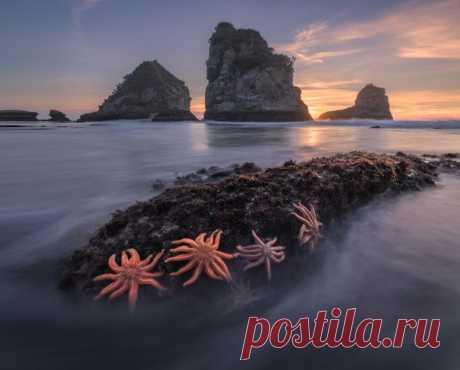 Западное побережье Южного острова Новой Зеландии. Фотограф – Sergey Aleshchenko: nat-geo.ru/community/user/223262/
