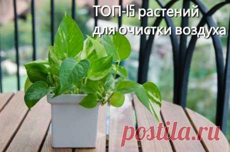 Топ-15 растений для очистки воздуха по мнению nasa.