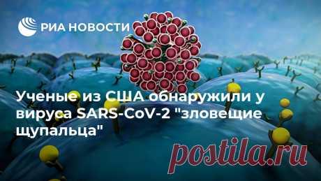 """Ученые из США обнаружили у вируса SARS-CoV-2 """"зловещие щупальца"""" Ученые из Калифорнийского университета в США выяснили, что вирус SARS-CoV-2, вызывающий заболевание COVID-19, использует для заражения отростки, похожие на... РИА Новости, 28.06.2020"""