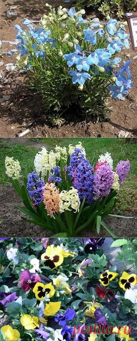(+1) - Легенды о происхождении цветов | САД НА ПОДОКОННИКЕ