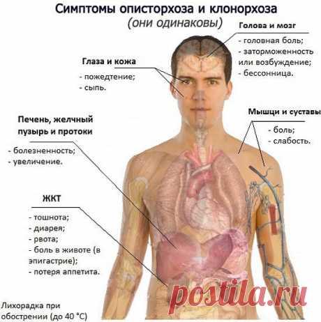 Паразиты в организме человека: симптомы и лечение народными средствами в домашних условиях