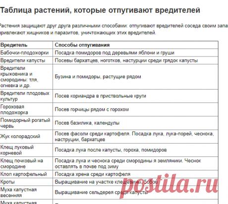Таблица растений, которые отпугивают вредителей | Vparnike.ru
