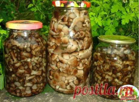 Соленые опята с хреном на зиму  Вам понадобятся: грибы опята – 3 кг чеснок крупный -1 головка перец черный горошком – 15 шт. укроп (зелень) – 50 г хрен (корень) – 2 шт. соль – по вкусу  1. Для засолки нужно использовать только свежие грибы. Поскольку грибы долго не хранятся, то свежесобранные целые грибочки следует перебрать, очистить и хорошо промыть проточной водой. Поставить минут на 30 замачиваться в подсоленной воде. Вместо замачивания грибы можно бланшировать — залит...