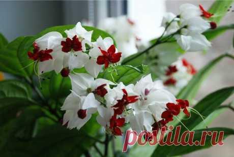 Красивейший комнатный цветок, который цветет почти круглый год и привлечет в Ваш дом счастье и большую удачу в любви и в делах   4 Сезона огородника   Яндекс Дзен