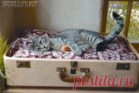 Чемоданное настроение | KotoMail.ru