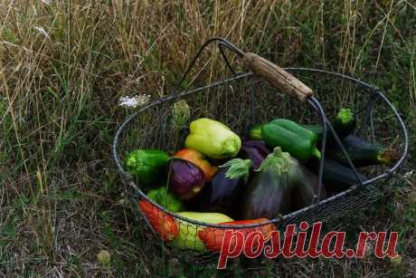 permaculture tubers vegetables - HD 1920×1282