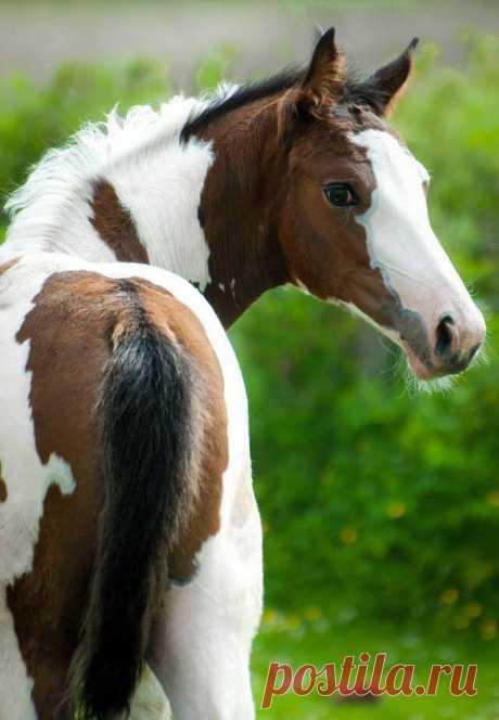 "scarlettjane22: ""  Photo: Solaris Sport Horses Horse Talk """
