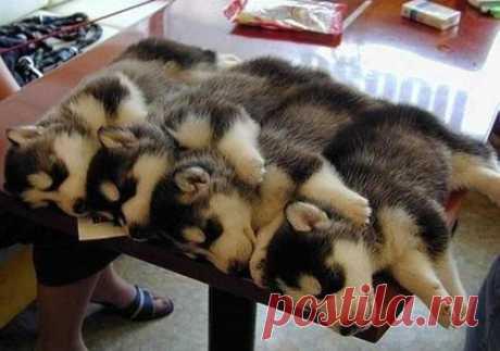 Algunos prefieren dormir aquí así)