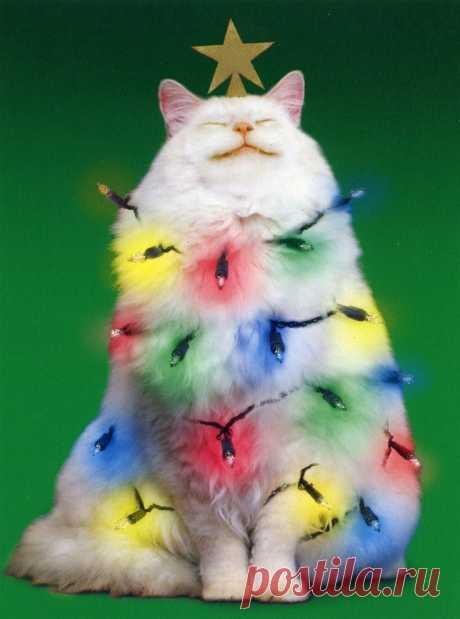 С Новым 2016-м годом ! | Кошкин дом