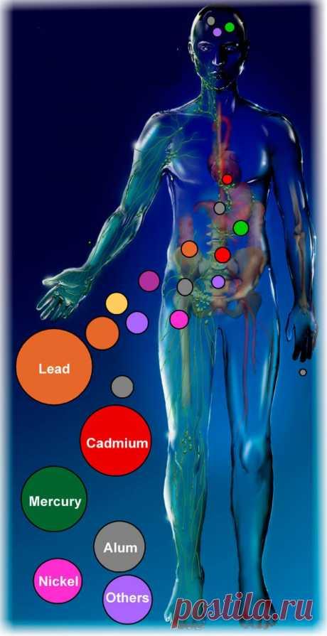 Как удалить тяжелые металлы из организма / Будьте здоровы