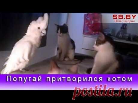 Попугай притворился котом | ЖИВОЙ УГОЛОК | Яндекс Дзен