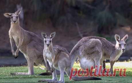 флора и фауна австралии– Google Поиск